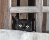 Schwarze Katze, die von einer Fensterscheibe lugt Stockbild