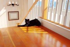 Schwarze Katze durch die Treppen stockfotos