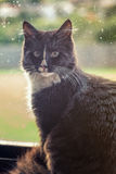 Schwarze Katze durch Fenster Stockfotos