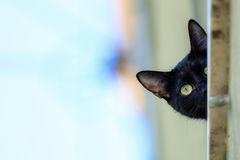 Schwarze Katze in einem Fenster, das unten schaut Stockfotos