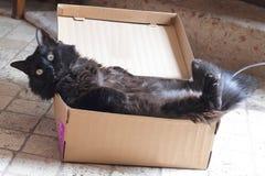 Schwarze Katze in einem Kasten Stockfotografie