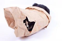 Schwarze Katze in einer Papiertüte Stockfotografie