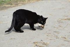 Schwarze Katze fing einen Vogel ab Stockfotografie