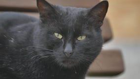 Schwarze Katze Hungrige obdachlose Katze des Porträts auf der Straßennahaufnahme schaut das Sitzen traurig stock video