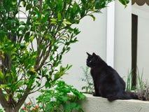 Schwarze Katze im Freien im Garten stockbilder