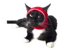 Schwarze Katze im Hut Stockfotografie