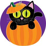 Schwarze Katze im Kürbis Stockbild