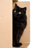 Schwarze Katze im Kasten Stockbilder
