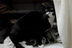 Schwarze Katze im Wandschrank lizenzfreies stockbild