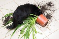 Schwarze Katze ließ fallen und brach Blumentopf mit Grünpflanze auf dem k lizenzfreie stockbilder