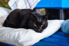 Schwarze Katze liegt auf dem Kissen stockbilder