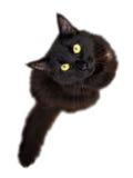 Schwarze Katze lokalisiert auf dem weißen Hintergrund, der oben Kamera betrachtet Lizenzfreies Stockfoto