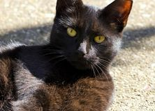 Schwarze Katze meditiert Lizenzfreie Stockfotografie
