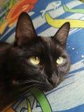 Schwarze Katze mit dem Hauptlügen der großen Augen auf Kissen lizenzfreies stockbild