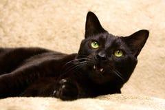 Schwarze Katze mit dem Mund offen lizenzfreies stockbild