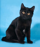 Schwarze Katze mit den gelben Augen, die auf Blau sitzen Lizenzfreies Stockfoto