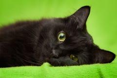 Schwarze Katze mit den grünen Augen, die auf Decke sich entspannen Lizenzfreies Stockfoto