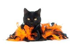 Schwarze Katze mit den schwarzen und orange Federn Stockfotografie