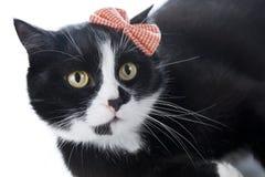 Schwarze Katze mit einem Bogen Lizenzfreies Stockfoto