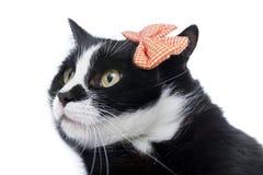 Schwarze Katze mit einem Bogen Stockfotografie