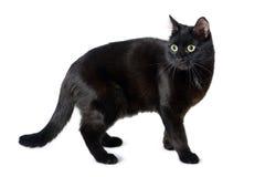 Schwarze Katze mit einem erschrockenen Blick auf Weiß Lizenzfreie Stockbilder