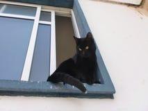Schwarze Katze mit einem Tipp des weißen Schwanzes stockfotos