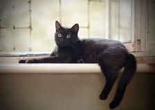 Schwarze Katze mit gelben Augen liegt an einem Fenster Lizenzfreie Stockbilder