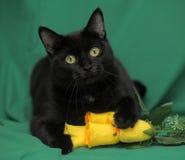 Schwarze Katze mit gelben Rosen Stockfotografie