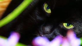 Schwarze Katze mit grünen Augen stockfoto