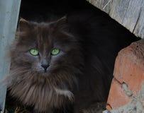 Schwarze Katze mit grünen Augen lizenzfreie stockbilder