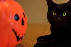 Schwarze Katze mit grünen Augen nahe bei Halloween-Kürbis Stockfotos