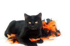Schwarze Katze mit Halloween-Dekorationen stockfoto