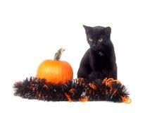 Schwarze Katze mit Kürbis und Filterstreifen stockbild