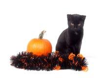 Schwarze Katze mit Kürbis und Filterstreifen Stockbilder