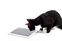 Schwarze Katze mit Tablet-Computer auf weißem Hintergrund Stockfoto