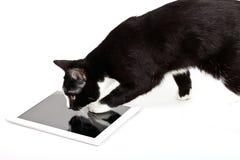 Schwarze Katze mit Tablet-Computer auf weißem Hintergrund Lizenzfreies Stockfoto