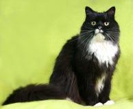 Schwarze Katze mit weißer Stelle sitzt auf Grün Lizenzfreie Stockbilder