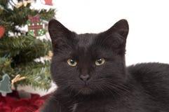 Schwarze Katze mit Weihnachtsbaum im Hintergrund lizenzfreie stockbilder