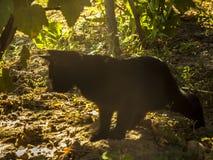 Schwarze Katze in Natur 2 Stockfoto