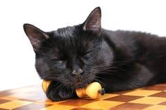 Schwarze Katze schläft auf einem Schachbrett auf einer Schachfigur Lizenzfreie Stockfotografie