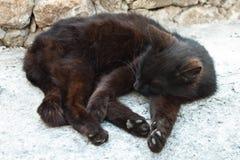 Schwarze Katze Schlafens Lizenzfreies Stockbild