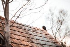 Schwarze Katze sitzen auf dem Dach eines alten Hauses auf einem kalten Wintertageshintergrund des Himmels lizenzfreies stockfoto