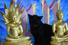 Schwarze Katze sitzt zwischen zwei Buddha-Statuen am Affeberg Khao Takiab in Hua Hin, Thailand, Asien Lizenzfreies Stockfoto