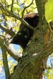 Schwarze Katze und Baum. Herbstjahreszeit. Stockfotografie