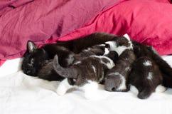 Schwarze Katze und Kätzchen Lizenzfreie Stockbilder