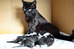 Schwarze Katze und Kätzchen Lizenzfreie Stockfotos