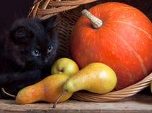 Schwarze Katze und Kürbis Stockfoto