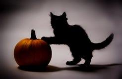 Schwarze Katze und Kürbis Lizenzfreies Stockbild