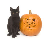 Schwarze Katze und Kürbis Lizenzfreies Stockfoto