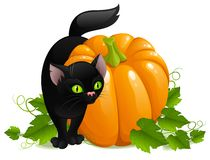 Schwarze Katze und Kürbis Stockfotos